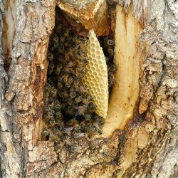 Bee Tree